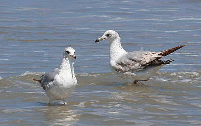 Beach Photograph - Floating Gulls by Cathy Lindsey