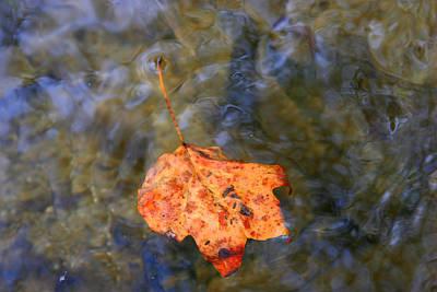 Floating Leaf Print by Paula Tohline Calhoun