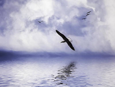 Flying Seagull Photograph - Floating On Air by Diane Schuster