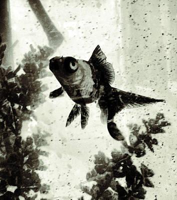Goldfish Digital Art - Floating Through Life by Patricia Januszkiewicz