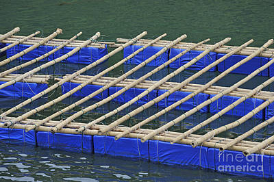 Photograph - Floatting Nets by Sami Sarkis