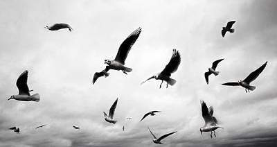 Seagull Photograph - Flock by Mark Rogan