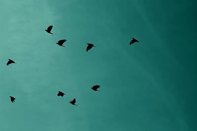 Digitalart Photograph - Flock Of Birds by Martin Newman