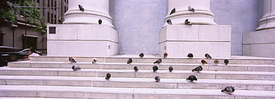Of Birds Photograph - Flock Of Pigeons On Steps, San by Panoramic Images