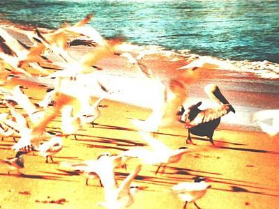 Lone Pelican Photograph - Flock Of Seagulls by Belinda Lee