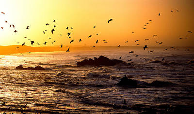 Flying Seagull Photograph - Flock Of Seagulls Fishing In Waves by Panoramic Images