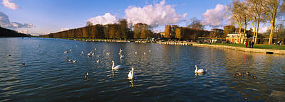 Chateau Photograph - Flock Of Swans Swimming In A Lake by Panoramic Images