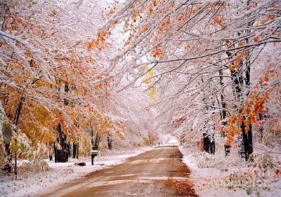Fall Photograph - Flocked Autumn by Terri Gostola