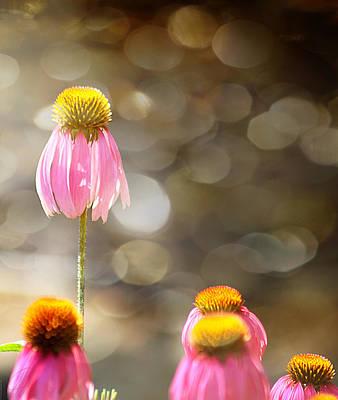 Floral Dance Print by Margaret Hormann Bfa