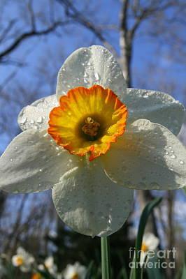 Floral Dew  Print by Neal  Eslinger