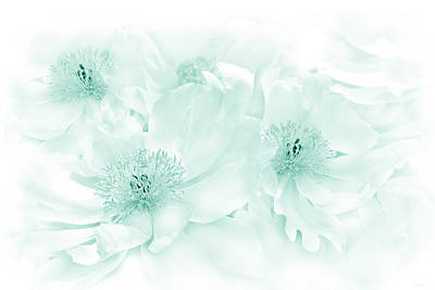 Paeony Photograph - Floral Peonies In Teal by Jennie Marie Schell