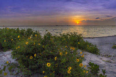 Floral Shore Print by Marvin Spates