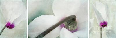 Feminin Photograph - Floral Whites by Priska Wettstein