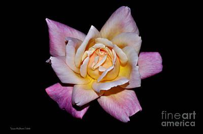 Floribunda Rose In Full Bloom Print by Susan Wiedmann