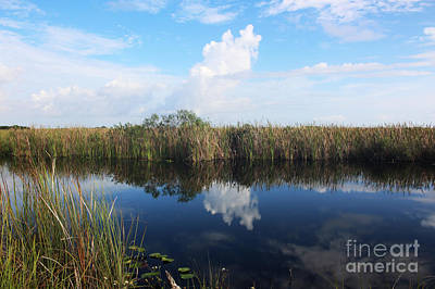 Professional Photograph - Florida Everglades by Cheryl Aguiar
