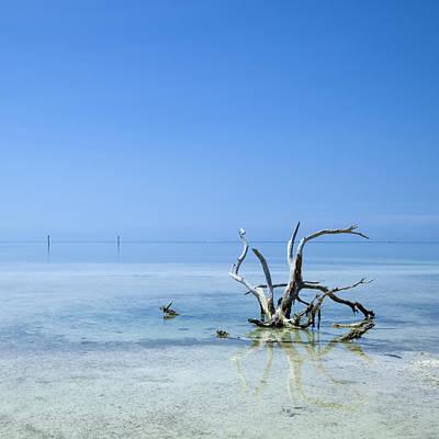 Northamerica Photograph - Florida Keys Lonely Root by Melanie Viola