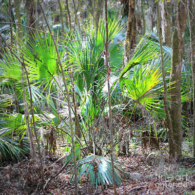 Palmetto Plants Photograph - Florida Palmetto Bush by Carol Groenen