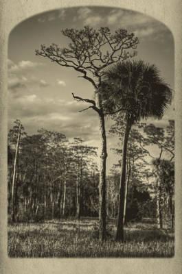 Florida Postcard Print by Debra and Dave Vanderlaan