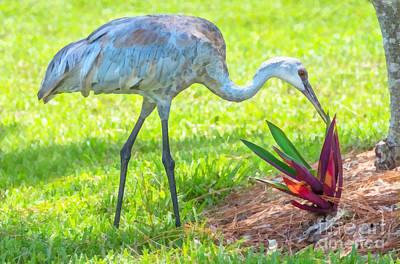 Crane Mixed Media - Florida Sandhill Crane by Anne Kitzman
