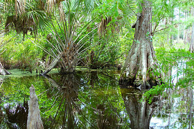 Crawfish Photograph - Florida Wetland by Carey Chen