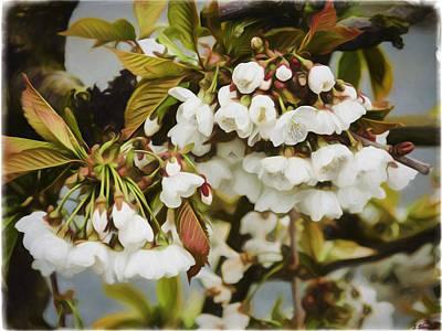 Jordan Painting - Flower Art - Apple Blossoms by Jordan Blackstone