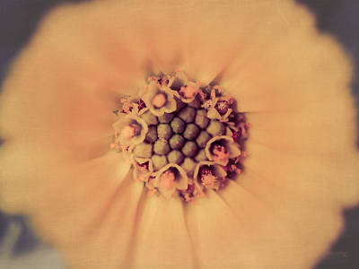 Flower Beauty IIi Print by Marco Oliveira