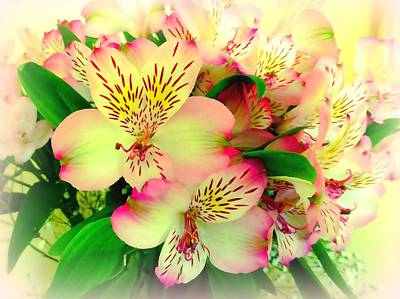 Lily Of The Incas Photograph - Flower Bouquet In Pink And Yellow by Bishopston Fine Art