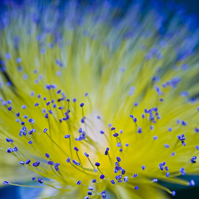 Cleanliness Photograph - Flower by Juli Scalzi