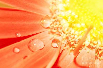 Background Photograph - Flower Closeup by Michal Bednarek