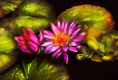 Flower - Lotus - Soaking In Sunlight Print by Mike Savad