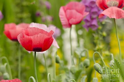 Flower Meadow Print by Darren Wilkes