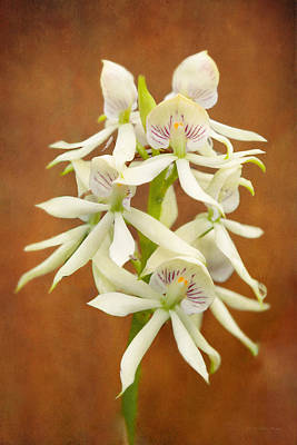 Flower - Orchid - A Gift For You  Print by Mike Savad