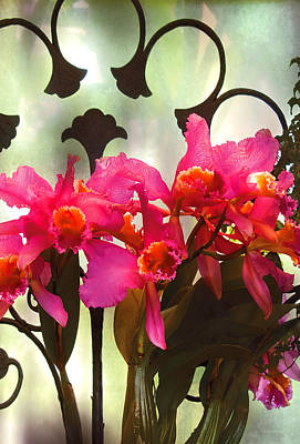 Flower - Orchid - It's All In The Presentation Print by Mike Savad