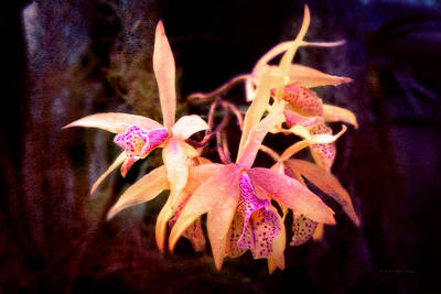 Flower - Orchid - Laelia - Midnight Passion Print by Mike Savad
