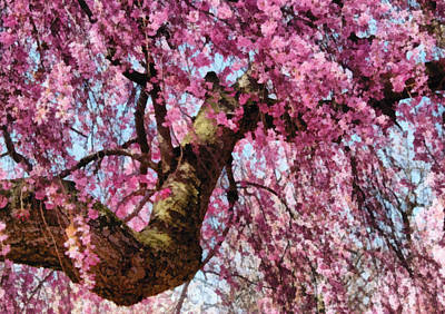 Flower - Sakura - Finally It's Spring Print by Mike Savad