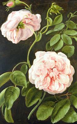Rosebud Painting - Flower Study by Johann Friedrich August Tischbein