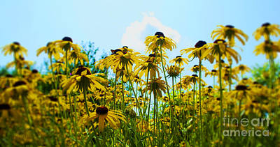 Flower - Sunflower Worshipers - Luther Fine Art Print by Luther   Fine Art