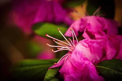 Flowering Bush Print by Sennie Pierson