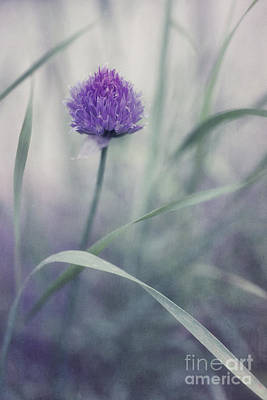 Chives Photograph - Flowering Chive by Priska Wettstein