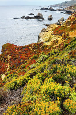 Of Big Sur Beach Photograph - Flowering Coastline by Tom Norring