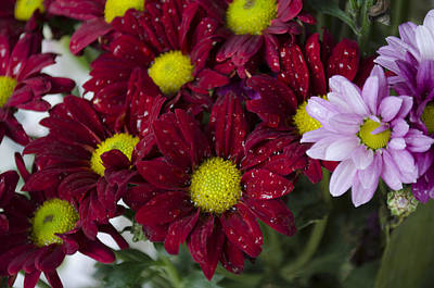 Flowers Print by Ahmed Tarek Shaffik