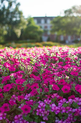 Osu Photograph - Flowers Back-lit  by Nathan Hillis