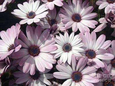 Landscape Photograph - Flowers by Cristina Stefan
