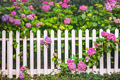 Flowers - Floral - White Picket Fence Print by Gary Heller