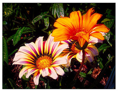 Oldzero Photograph - Flowers From The Library 2 by Steve Benefiel