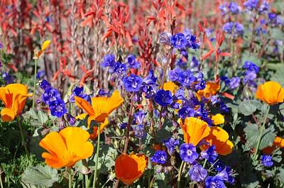 Flowers Gone Wild Print by David Rizzo
