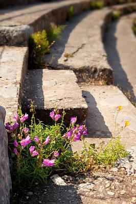 Bible Photograph - Flowers Grow Among The Stadium Seats by Brian Jannsen