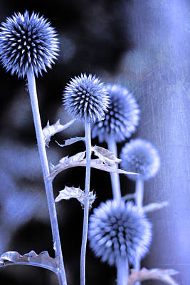 Flowers In The Metal Print by Toppart Sweden