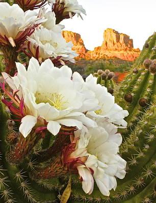 Rocks Love Too Photograph - Flowers Of Sedona by Markus Eye
