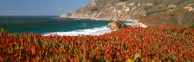 Big Sur California Photograph - Flowers On The Coast, Big Sur by Panoramic Images